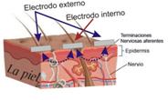 Influencia de los impulsos DENAS y procesos, que pasan en la superficie de la piel, al contactar con electrodo del aparato DENAS
