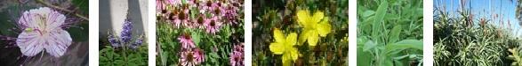 Krauter-Heilpflanzen.jpg