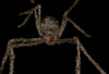 Giant Spider 100cm with light up eyes
