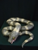 Giant realistic life size snake - Horror movie prop
