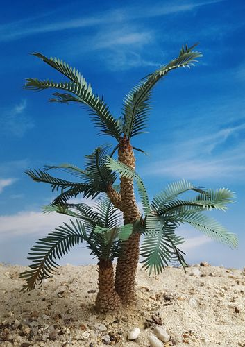 Cycad Palm – Jungle, Pacific, Desert