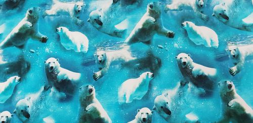 Digitale print Swimming Polar